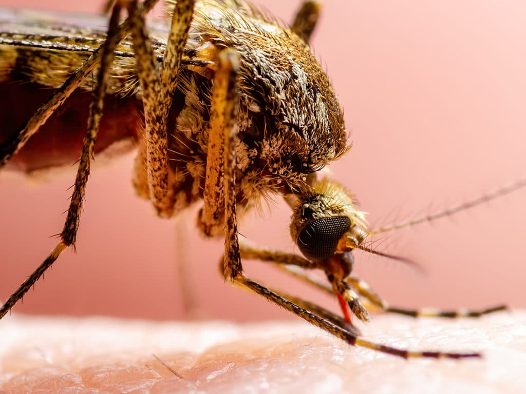 Tips for Avoiding Mosquitos