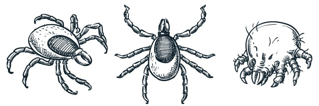 Oak and other types of outdoor mites