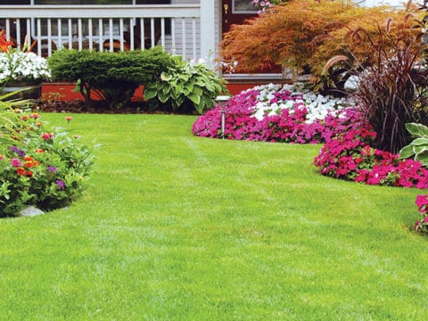 nursrey landscape flowers mulch