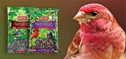 pet bird wild bird food see