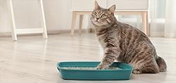pet cat kitten litter box