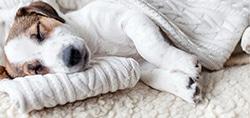 pet dog cat bed pillows