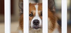 pet dog cat kennel gates crates barrier