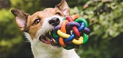 pet dog cat toys balls ropes bones