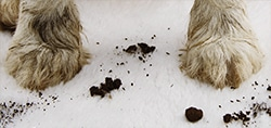 pet dog cat urine stain smell cleaner
