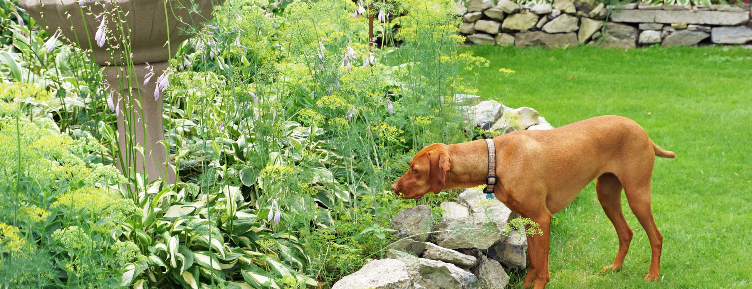 How to dogscape your yard