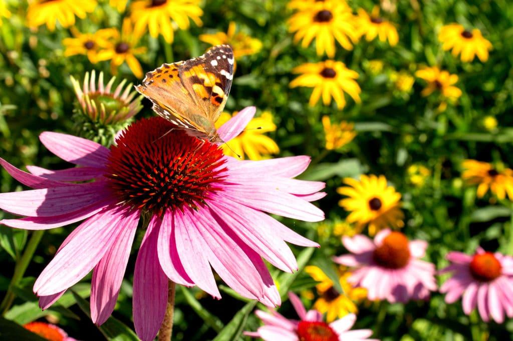 Growing Tips Wildflowers