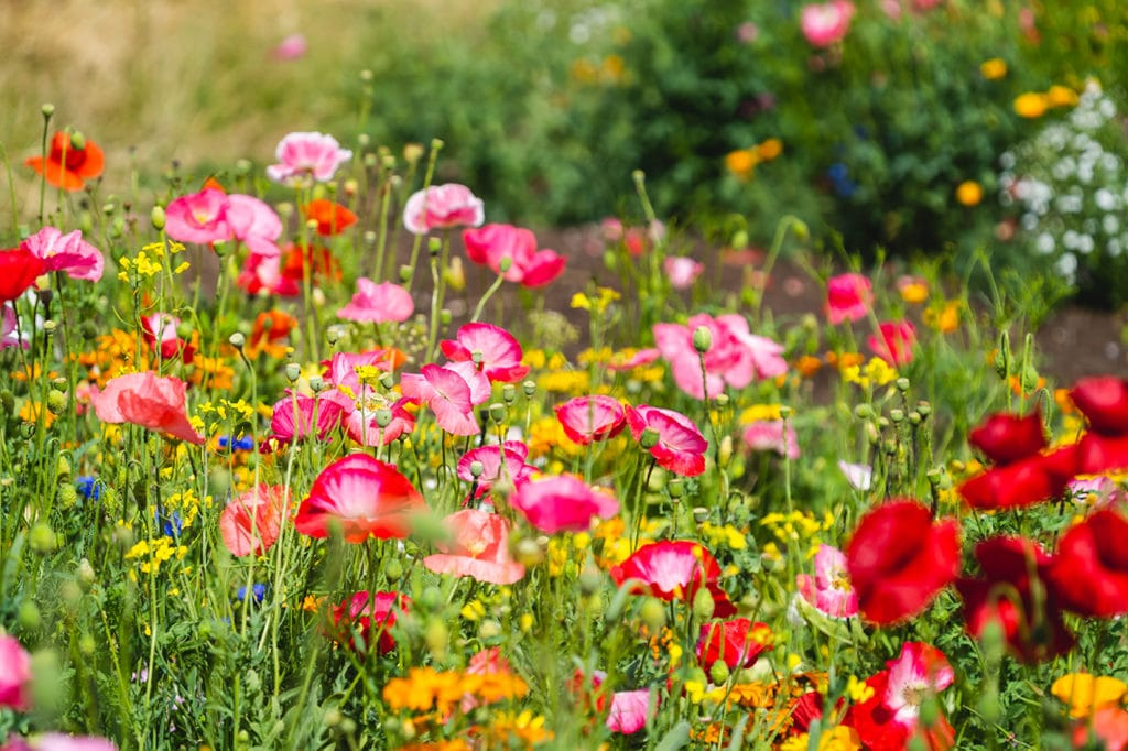 Wildflower Growing Tips for Success