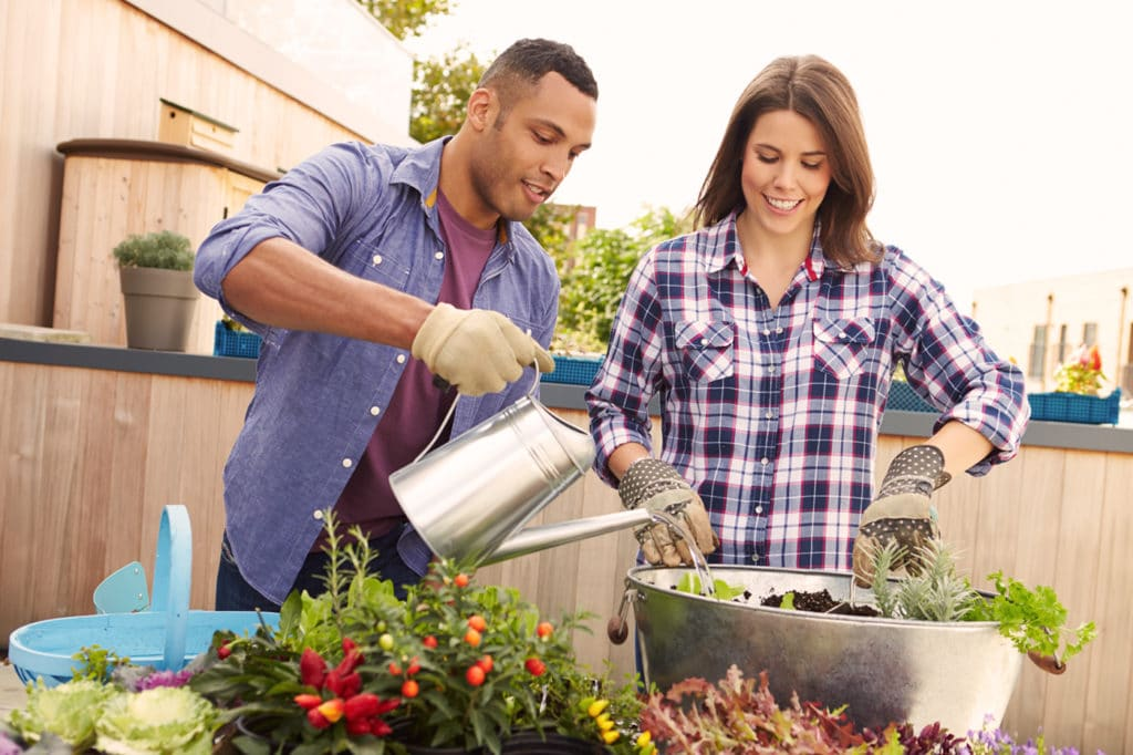 Keeping Your Container Plants Watered Correctly